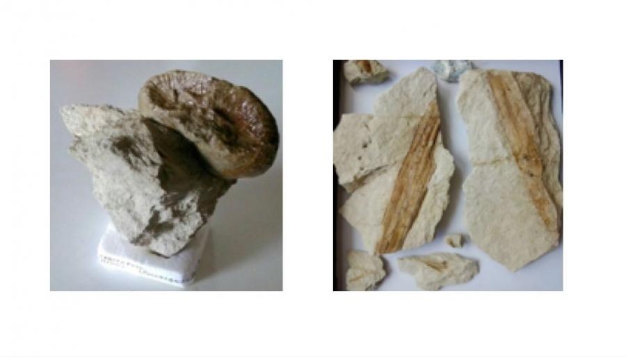 Metodo per la datazione di fossili