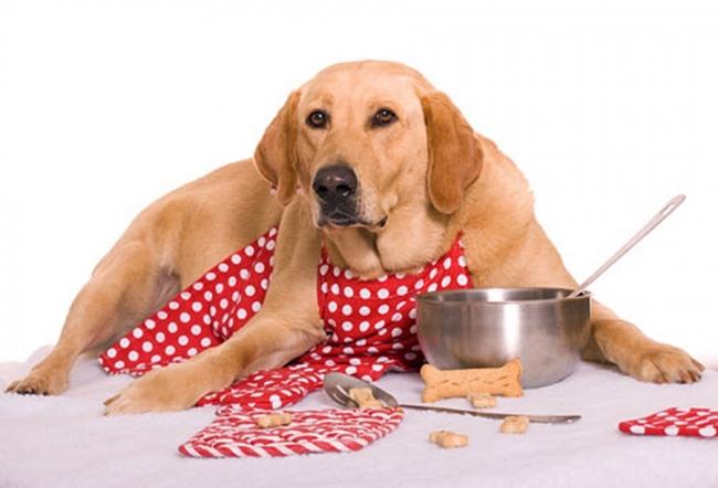 Cucina casalinga per cani nuova tendenza food - Cucina casalinga per cani dosi ...