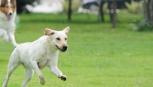 Cane lasciato libero in cortile: inquilino condannato.