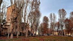 San Secondo. Potatura di 140 platani sui viali comunalie in piazza Mazzini