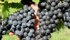 Vini emiliano-romagnoli sui mercati extra-Ue. Scadenza bando 22 novembre