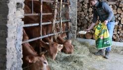 Sostegno alle stalle montane.  Accordo Consorzio Agrario - ARAER