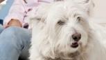 Incinta con cani e gatti per casa: ecco perché la convivenza fa bene. Alla psiche e al sistema immunitario!