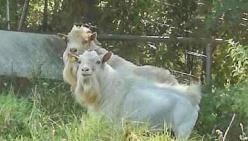 """""""Animali domestici 'strani', è boom sul territorio reggiano"""""""