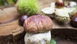 Borgotaro: prosegue, anche nel prossimo fine settimana, la kermesse dedicata al fungo IGP