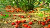 L'irrigazione intelligente riduce gli sprechi di alimenti in campo