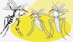 Sanità. Stop alle zanzare