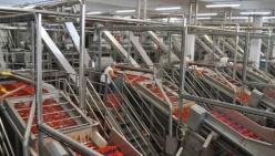 I corsi per manutentori di impianti del pomodoro