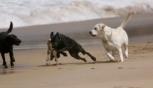Spiagge dog-friendly, cosa offrono quelle dell'Emilia-Romagna