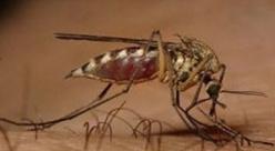 West Nile Virus, confermata anche quest'anno la circolazione del virus sul Piacentino