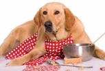 Cucina casalinga per cani: nuova tendenza food
