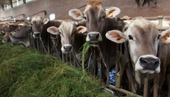 All'Università di Parma 587mila euro per due progetti di ricerca per il settore lattiero caseario