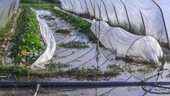 """Nel reggiano: """"Bombe d'acqua e mitragliate di grandine: danni all'agricoltura per oltre un milione di euro"""""""
