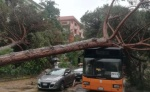 Tromba d'aria a Milano Marittima: caduti i pini secolari